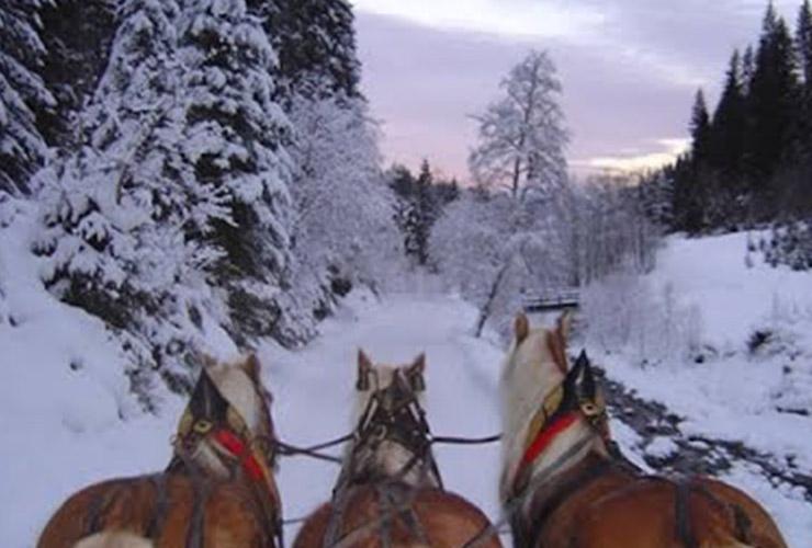 winterkoets in de sneeuw